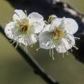 月季花、桃花。