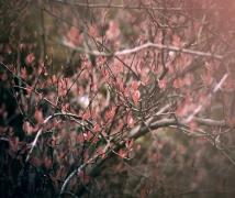 小品(春)
