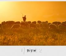 【行摄坝上】(四)牧羊曲