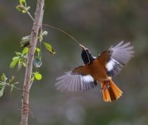 洪湖公园拍鸟