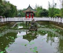 粉岭云泉仙馆 - 荷花池