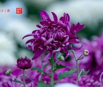 2018東湖公園花展