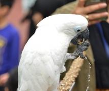 鹦鹉 - 8