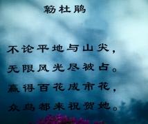 【莲花山】三角梅