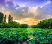 深圳洪湖公园