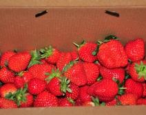 草莓!草莓!
