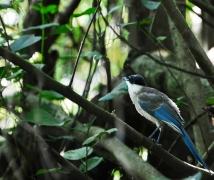 不知名称的雀鸟