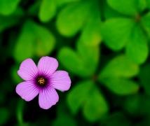 春暖花开时    无名小花一