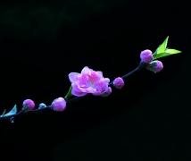 桃花盛开迎新春