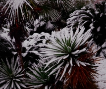 武汉江滩雪景