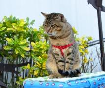 16 个月的猫猫!
