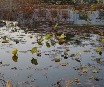 年初一路過金門的雙鯉濕地隨便拍幾張