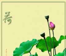 荷--莲--小草花