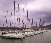 昨 天 观 看 深 圳 帆 船 赛