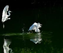 【天鹅堡】学拍鸟