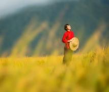 《稻谷黄了的时候》