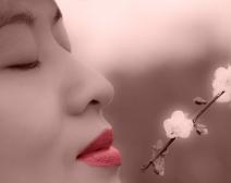 女人如花,花似梦