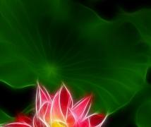 线之绘-花卉