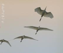 黄昏鸟鸣红树林