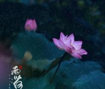 《雨荷》——深圳28届荷花节