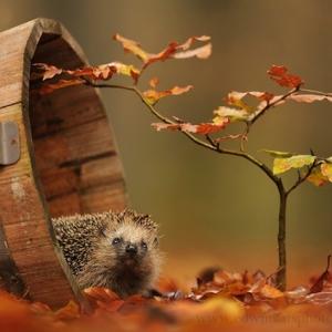 『图集』入冬前最后一抹秋色